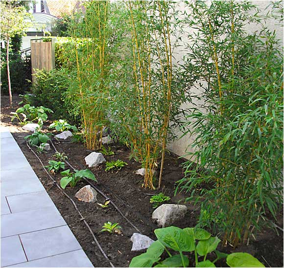 Gartengestaltung rollrasen teichbau gabionenzaun for Rollrasen anlegen